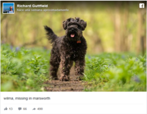 perro robado amazon